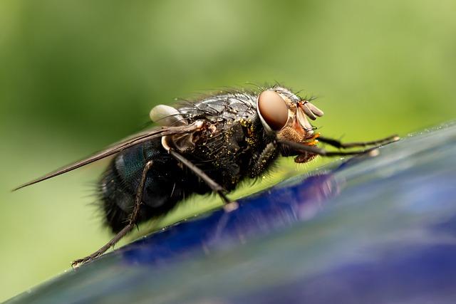 Czy lepy na muchy są skuteczne?